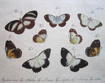Antique Print 1783 Jablonsky Hand Colored Engraving of Butterflies-Black & White