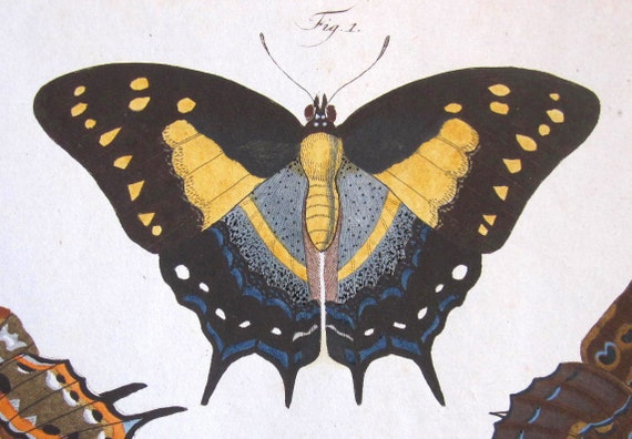 Antique Print 1783 Jablonsky Hand Colored Engraving of Butterflies-Tailed Emperor