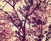 Nature Photography, Tree Photograph, Floral Branches, Blossoms, Pink Flowers, Dreamy, Vintage Inspired, Shabby Chic, Home Decor