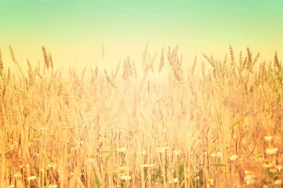 Nature Photography, Fields of Gold, Landscape Photograph, Summer, Wheat, Farm, Shabby Chic, Pastel, Yellow, Vintage Inspired, Home Decor