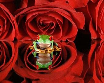 Red Roses, Flower Art, Frog Art, Red, Rose