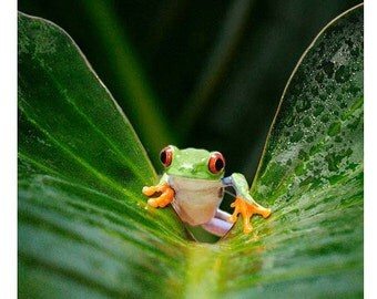 Frog Art, Frog on Leaf, Colorful Tree Frog