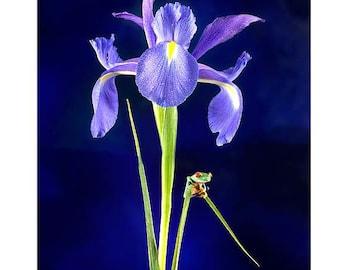 Blue Flower, Live Baby Frog, Iris Flower, Iris, Wall Art