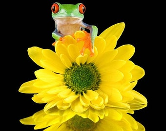 Daisy and LIVE Frog Photo, Pretty Yellow Flower, Yellow Wall Art