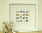 RESERVED - Framed cockle shells - 3D art - found objects