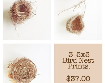 Birds Nest Photograph Set of 3 Bird Nest 5x5 Prints