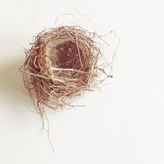 Bird nest photograph, nature photography, brown, neutral