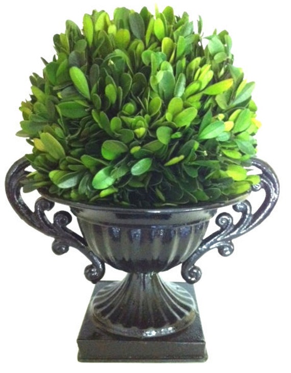Centerpiece Preserved Boxwood Ball in Hand-painted Urn by Summerwind Interiors