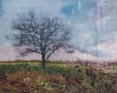 Soulful Tree - Encaustic Landscape Painting - 6x6