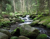 Nature photography River in the Deep Forest. Green Trees and Stones. High Quality Print - Czech Mountains (20x30 cm - A4)