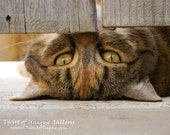 Cat and kitten Photography-  8 x10 Photography,  animal Photography - Beige, Gold, Brown, Grey, green, Calico, black, white