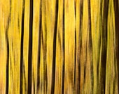 6x9 Giclee Fine Art Print of Abstract Yellow Trees in Amicalola Falls forest Georgia