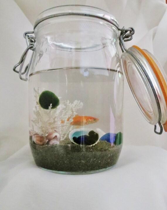 Items similar to marimo ball aquarium kit pet marimo for Betta fish moss ball