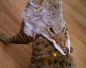 Coyote Face Cat Harness