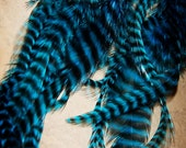 "Feather Extensions : 7 Blue Grizzly Rooster Feather Hair Extensions Medium (6-8"")"