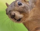 Greeting Card - Nosy Fox Squirrel - Peeping Tom