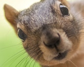 Greeting Card - Fox Squirrel - Its not Polite to Stare
