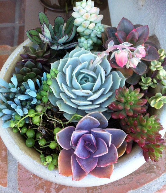 Succulent plant diy dish garden plants perfect create your for Garden arrangement of plants