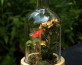 Vodka Bottle Terrariums