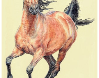 Bay Arab Horse - original artwork in coloured pencil