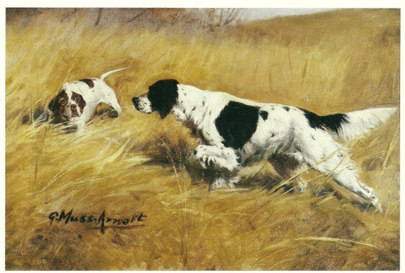 """The """"Setter and Pointer"""", This is an Original 1983 AKC Vintage Book Print"""