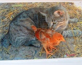 Loving Cat Rainbow With Baby Chick Limited Edition Print