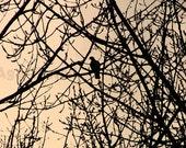 Woodland Art - Zen Fine Art Print - Black Silhouette Tree, Beige, Brown, Dove Art, Nature Wall Art, 5X7