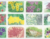 CLEARANCE SALE - 6 for 5 Blank Note Cards with Flowers from Watercolor Paintings - prints from watercolor paintings
