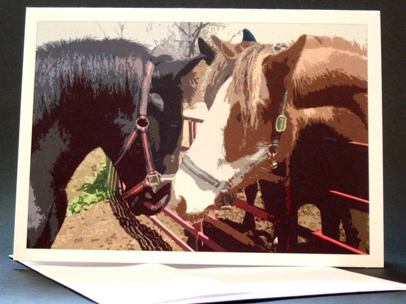 Blank Card with Horse Colts Meeting