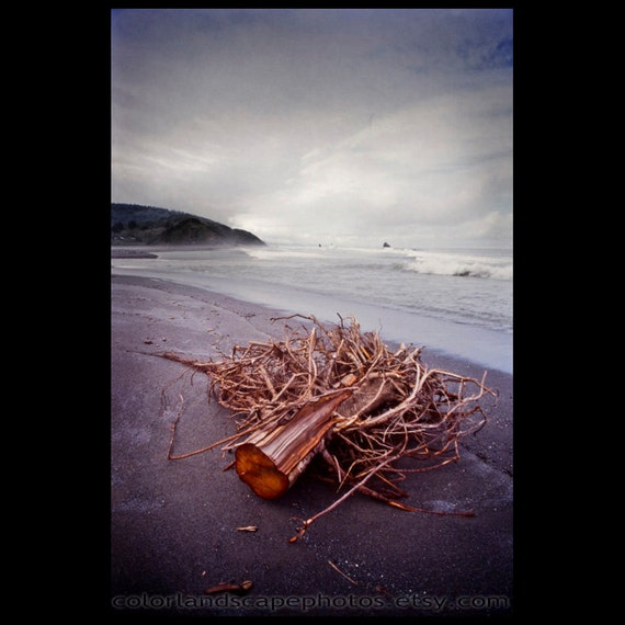 Landscape Photograph - Driftwood on California Beach Photograph, California - Pacific Coast Ocean Art Print
