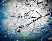 Sitting, Waiting, Wishing - 8x12 Bird nature photography tree night print branches midnight dark home decor wall room art snow snowfall blue