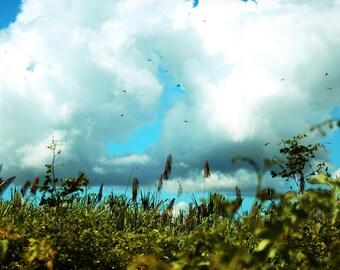 Panama Sky - 5x5 Nature landscape photography print photo land and blue sky green foliage puffy white clouds home wall art decor birds