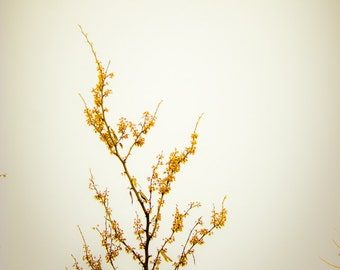 Geisha - 5x5 Nature flower tree photography print blossom photo blooms floral flowers photograph yellow home decor wall art spring japanese