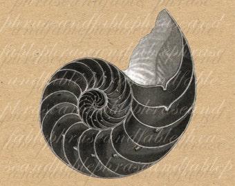 Nautilus Shell 051 Iron On Digital Download Transfer T Shirt Sea Life Chambered Nautilus Marine Seashell Underwater Chamber Math Spiral