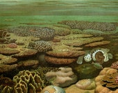 1890 Antique lithograph of CORALS, different species. Barrier Reef. Sea Life. 127 years old nice print