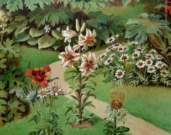 1897 Antique print of ORNAMENTAL PLANTS. Garden Plants. Houseplants. Flowering Plants. 119 years old gorgeous lithograph.