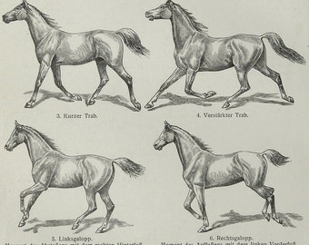 1897 Antique print of HORSES. 120 years old plate