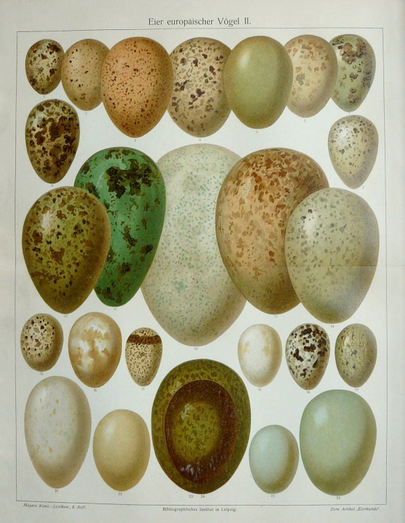 1897 Antique fine lithograph of BIRD EGGS. 115 years old gorgeous print.