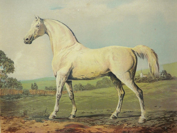 1890 Antique fine lithograph of a WHITE HORSE. 122 years old gorgeous print.