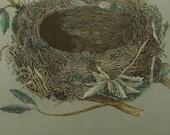 1892...Antique Nest & Egg Nature Print by Morris....Redbreast CVIII