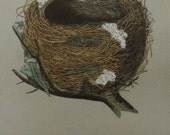 1892..Antique Nest & Egg Nature Print by Morris...Willow Warbler CXXVIII