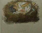 1892...Antique Nest & Egg Nature Print by Morris.....Redstart  CX