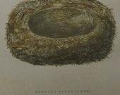 Antique Nest & Egg Nature Print by Morris.....Spotted Flycatcher  XXXVIII