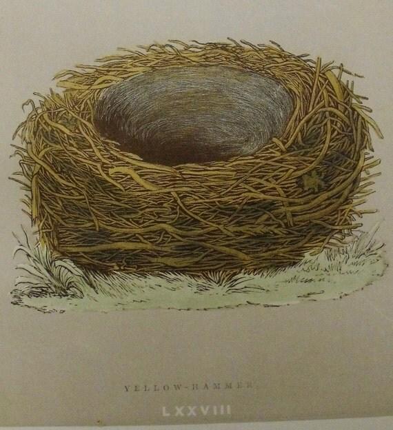 1892...Antique Nest & Egg Nature Print by Morris...Yellow-Hammer  LXXVIII