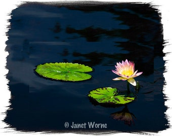 Floating in Dark, water lily fine art photograph