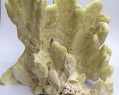 Yellow Green Fire Coral Branch Nautical Beach Decor