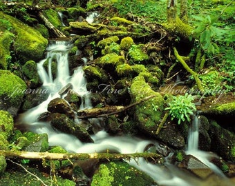 Flowing Stream in Mossy Forest, Fine Art Photo Print, Large 14x9.5