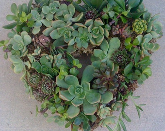 "Succulent living wreath kit - 11"" wreath form, 65 assorted succulent cuttings, 65 floral pins"