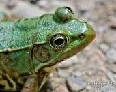 Green Frog - Fine Art Nature 8 x 12 Photograph
