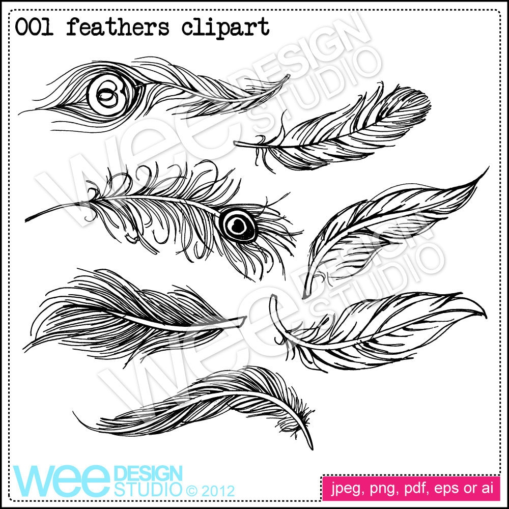 feather digital clipart graphics png jpeg  u0026 eps personal or
